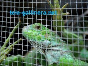 La malla gallinera también es usada para fabricar jaulas para reptiles pequeños, como iguanas o tortugas